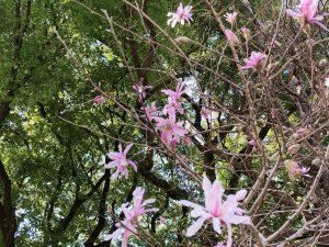 伊勢山にも春が..:。*゚