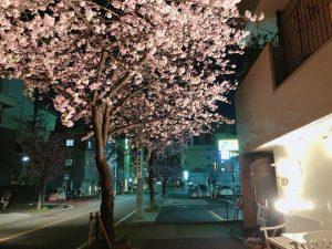 ◎桜の開花宣言前に…★◎